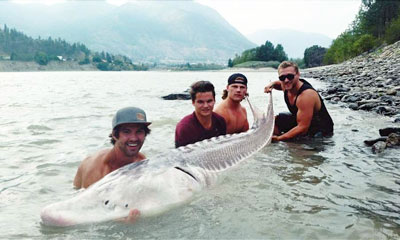Young Anglers Catch Giant Sturgeon In Fraser Canyon